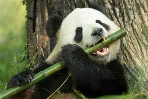 SEO Chinois - Penalité Duplicate Content - Panda - AUTOVEILLE